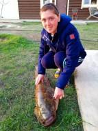 Рыба сом обладает длинным, сплющенным и довольно мощным телом, которое лишено чешуи и покрыто слоем слизи,