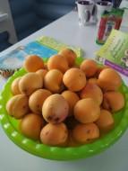 Вот такие у нас абрикосы растут .