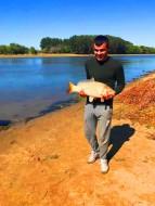 Карп – неприхотливая крупная, пресноводная рыба, которая фактически является культурной формой речного сазана.